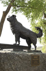 Shep statue at Fort Benton