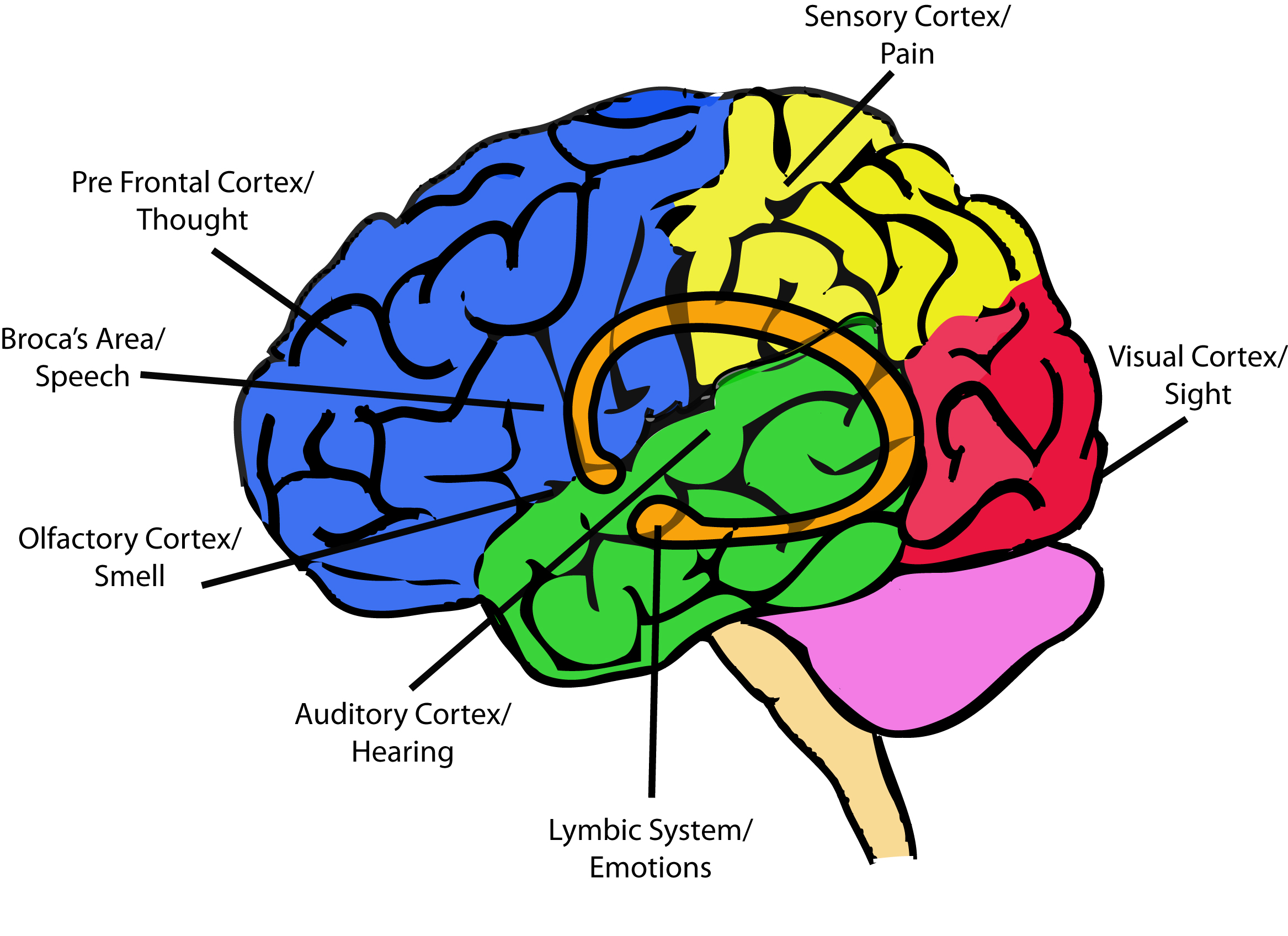 Your Brain On Trauma Psychology Today