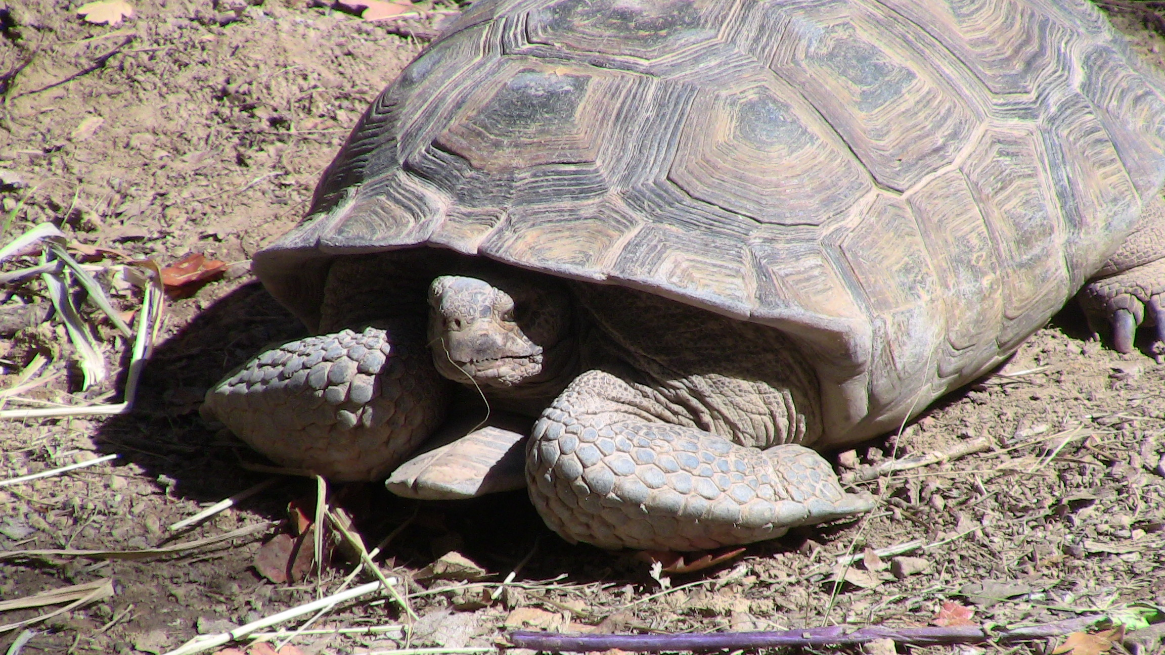 Lessons from the Tortoise People | Psychology Today