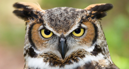 Night Owls May Face Special Challenges >> Why Night Owls Are More Intelligent Than Morning Larks Psychology