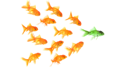Behavioral Health vs  Mental Health: Battle conformity