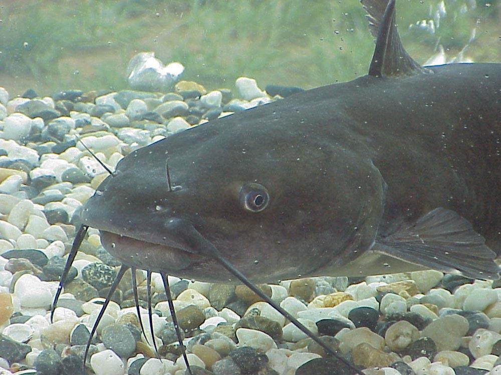 How common is catfishing