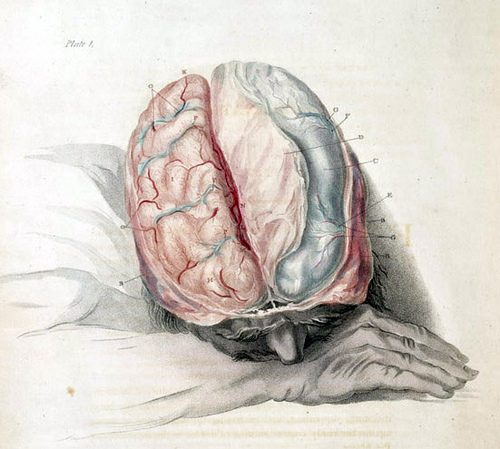 Your Brain on Ketones