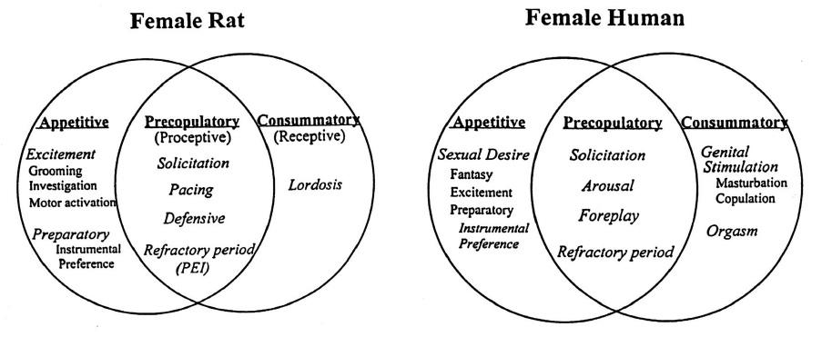Human Sexual Behaviour