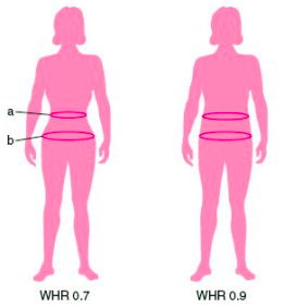 The Relationship Between Waist-Hip Ratio and Fertility