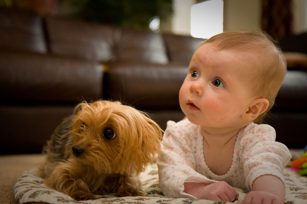 why people sometimes care more about dogs than humans psychology today