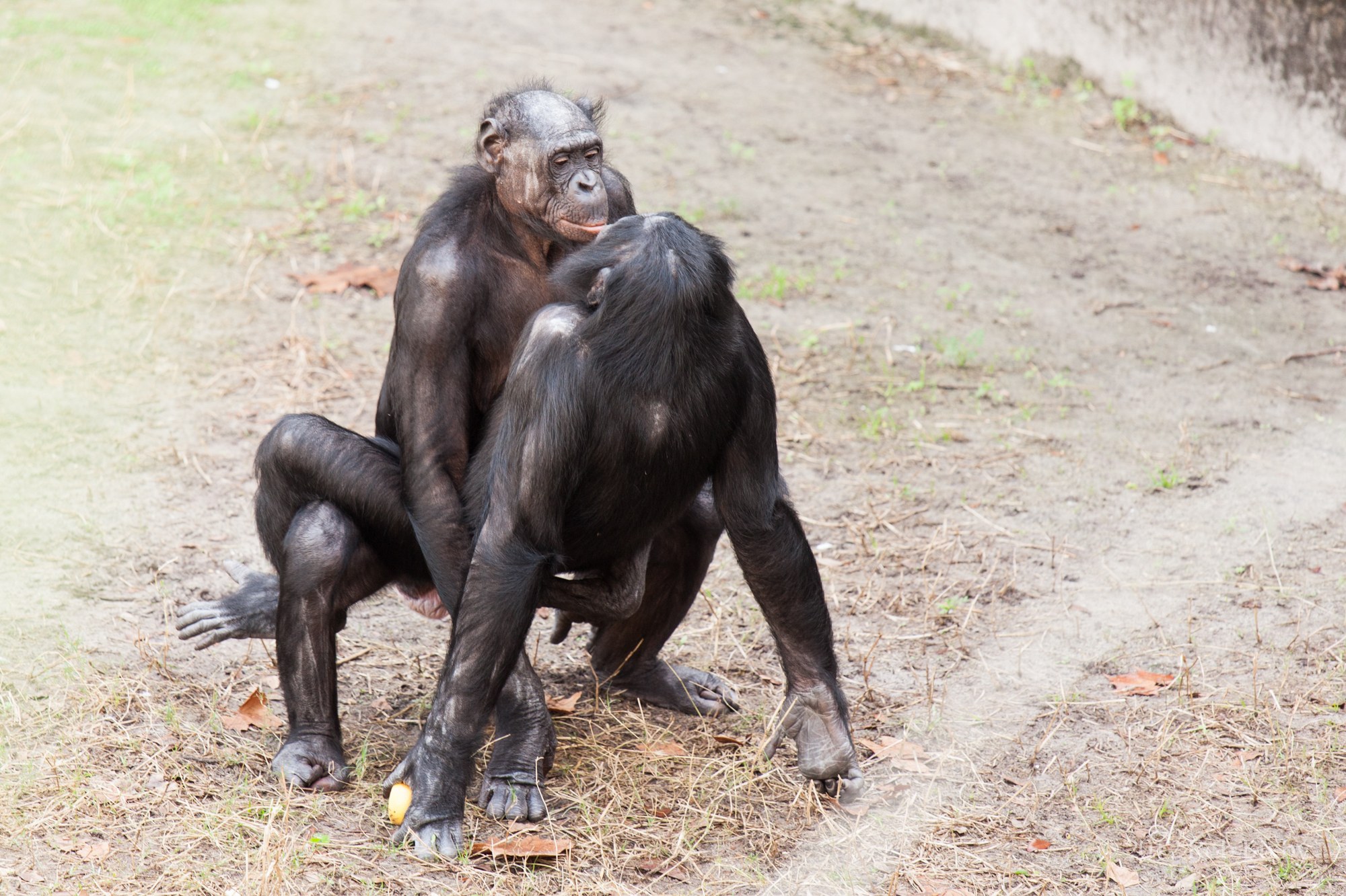Mating like Bonobos