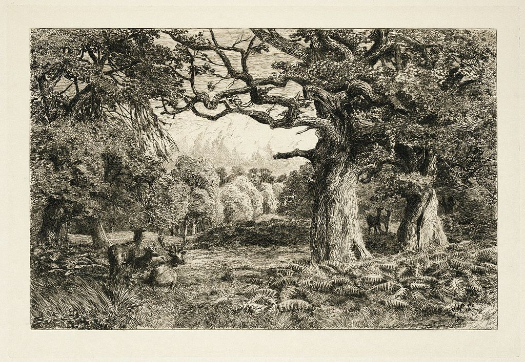 1889 etching of the Forest of Arden, created by John Macpherson