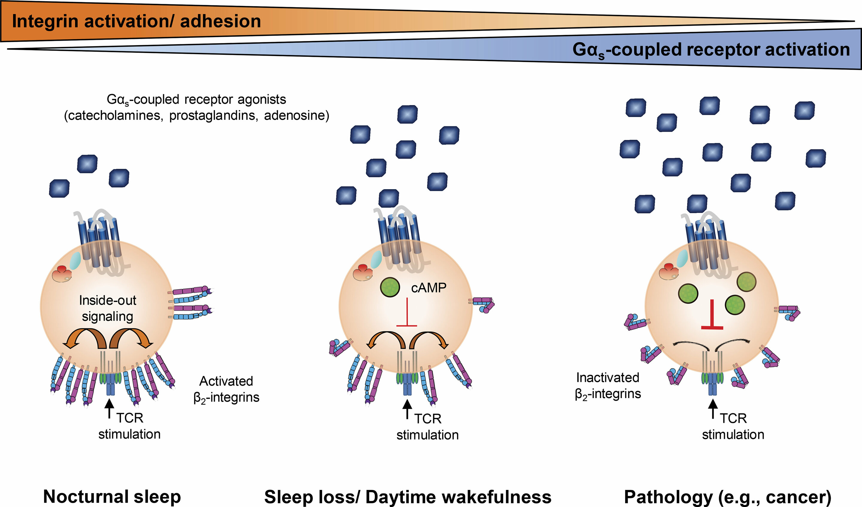 Study Pinpoints Autism Linked Protein >> New Study Pinpoints Why Sleep Is Often The Best Medicine