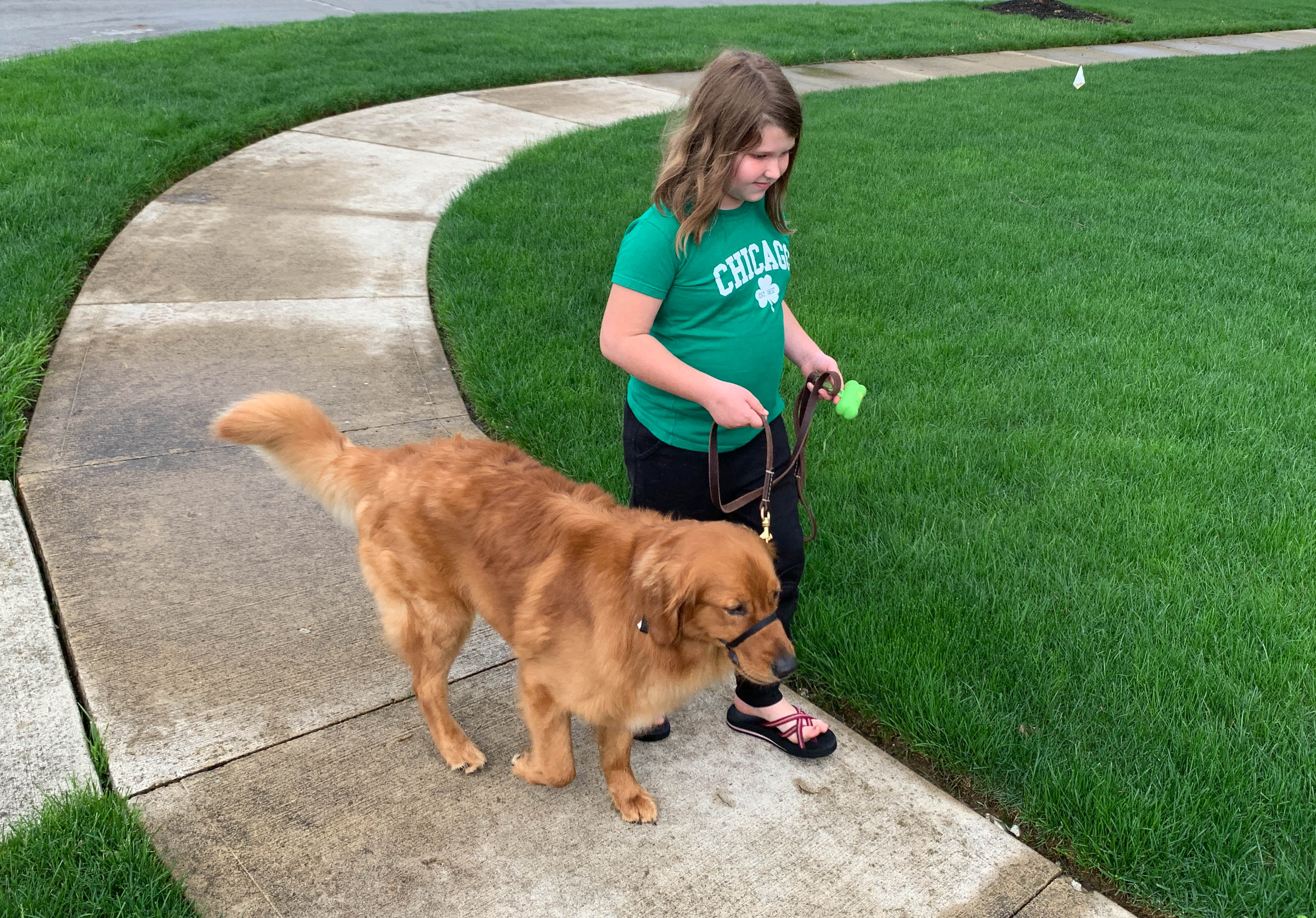 These Dog Breeds Pose the Highest Risk of Hurting Children