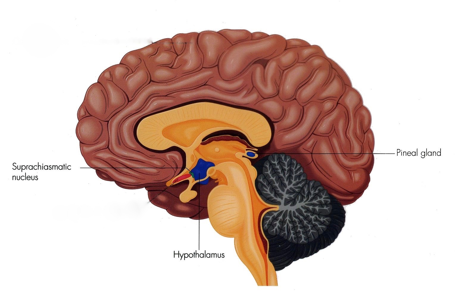 Taking Melatonin but Still Can't Sleep? | Psychology Today