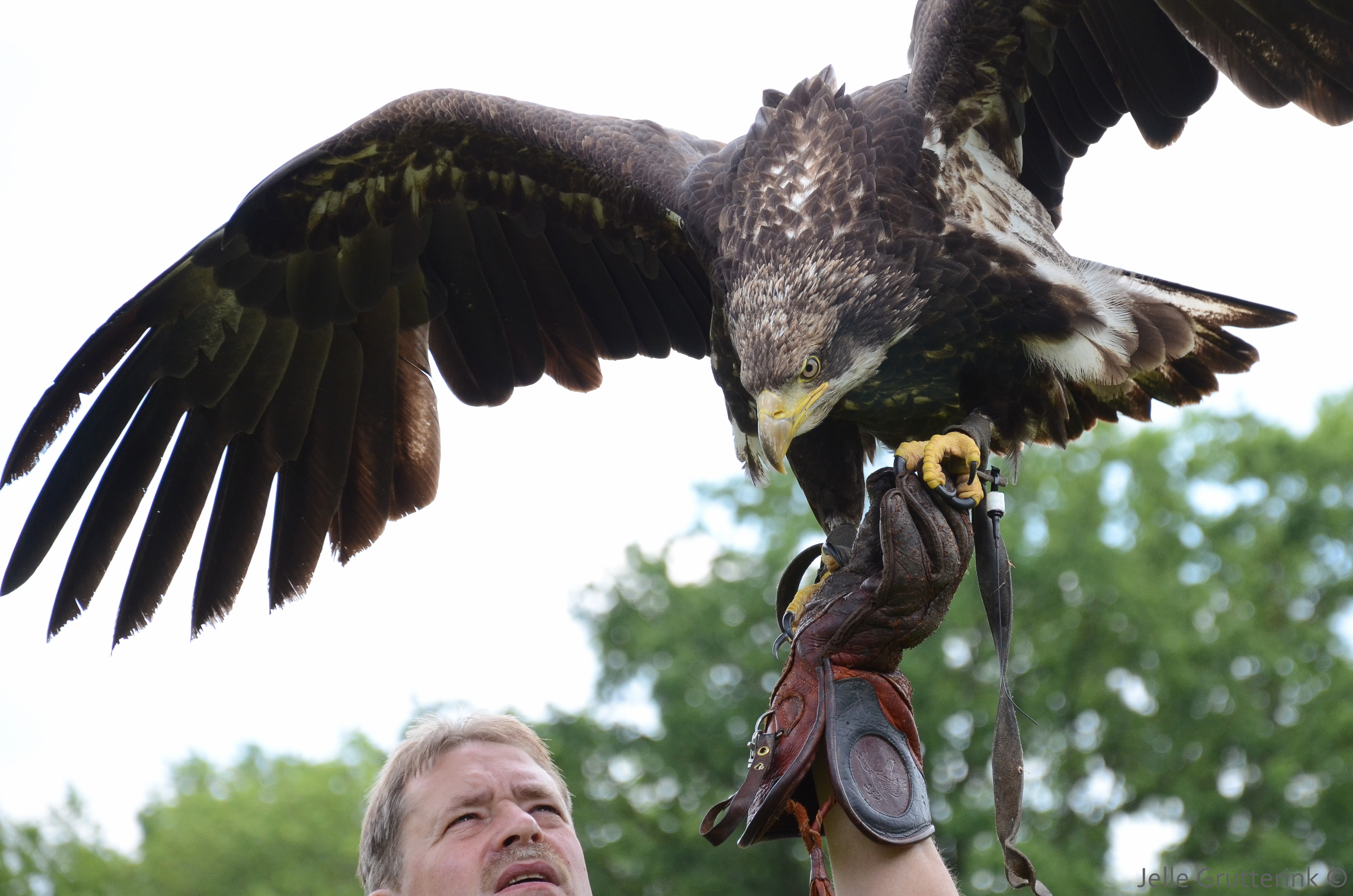 Is a Bird in the Hand Worth Two in the Bush? | Psychology Today