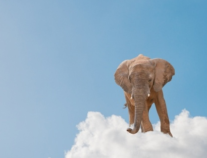 what kinds of people believe animals go to heaven psychology today