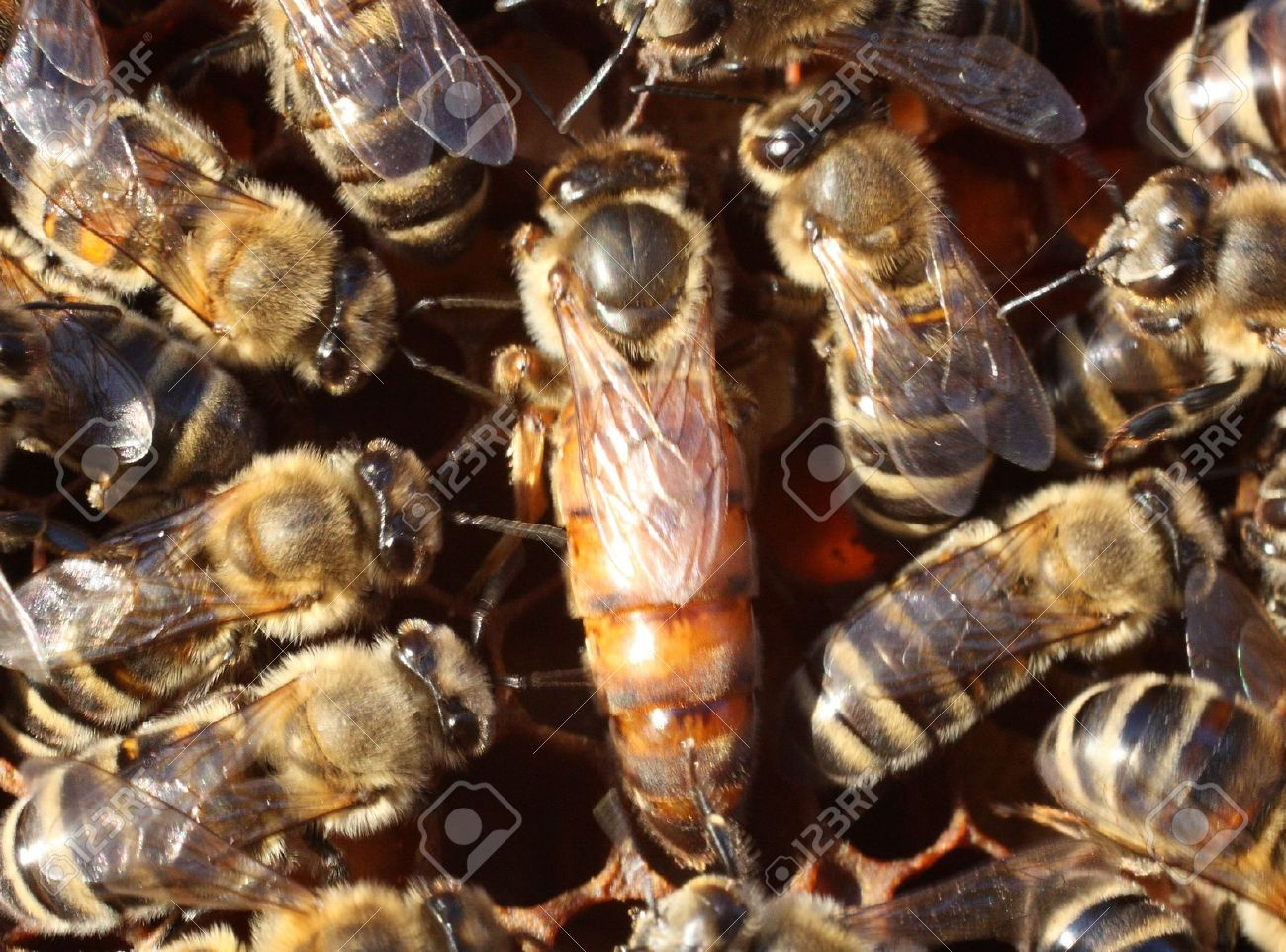 did hillary clinton fall victim to the queen bee effect
