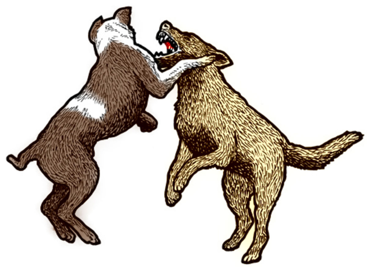 Aggression Between Dogs in the Same Household | Psychology Today UK