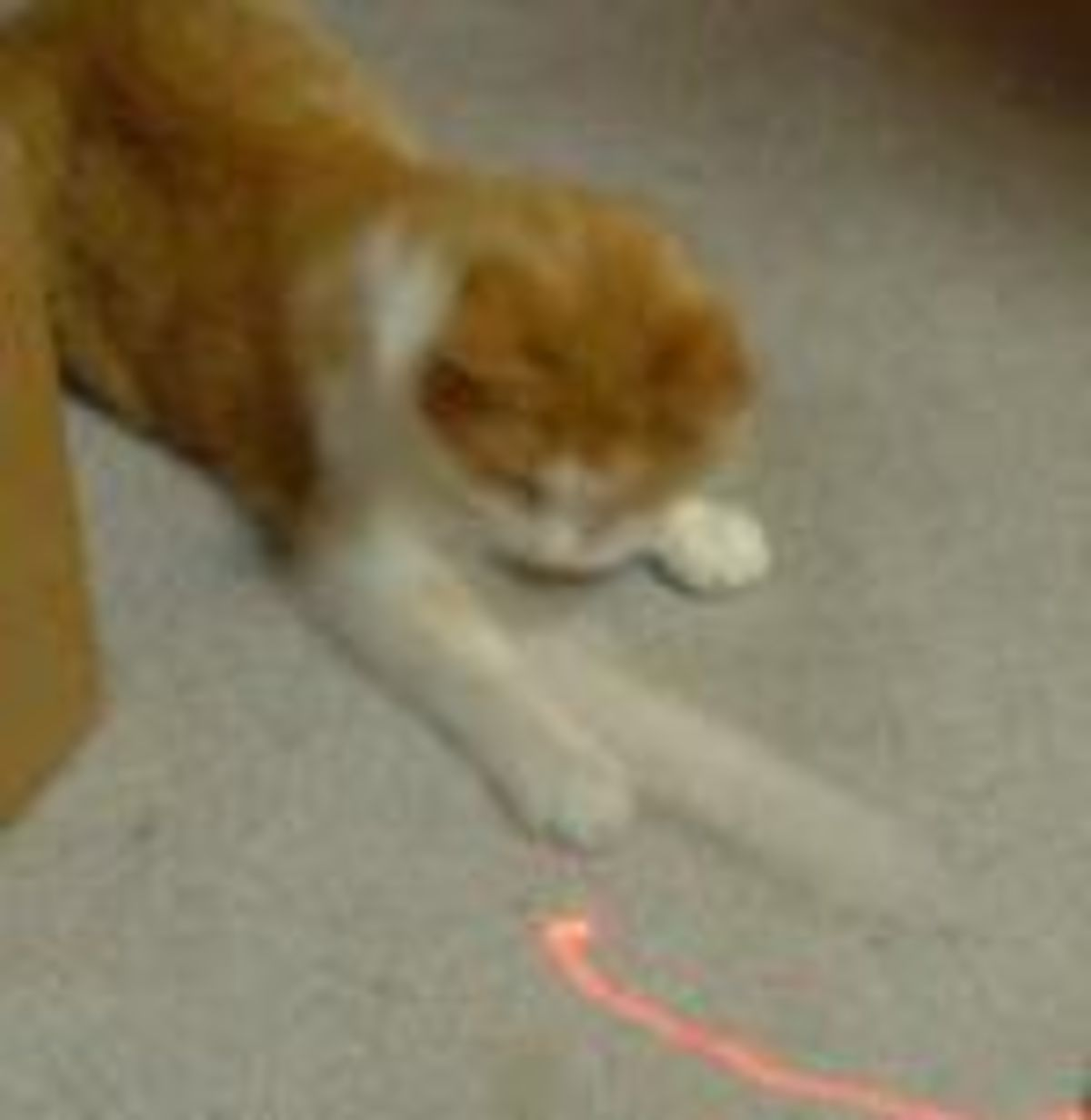 It's Alive! Why Cats Love Laser Pointers | Psychology Today