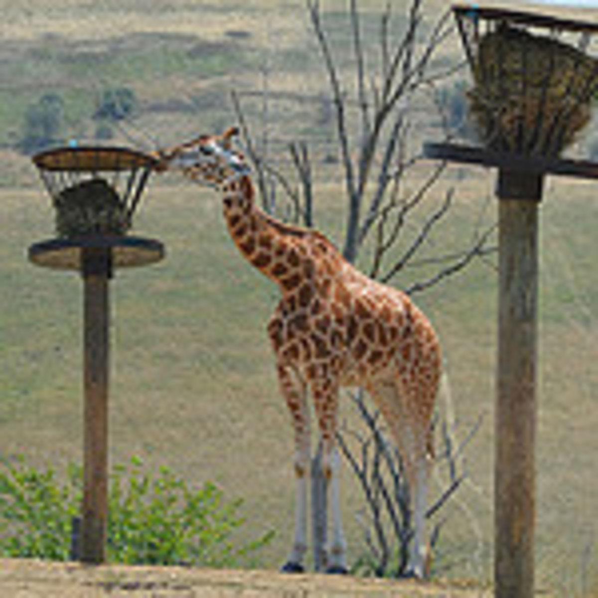 Don't Describe the Flashlight—Just Draw the Giraffe