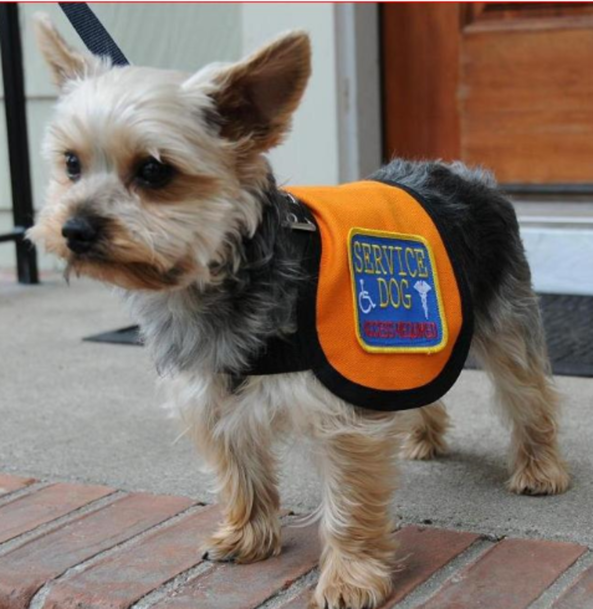 Service Animal Scams A Growing Problem