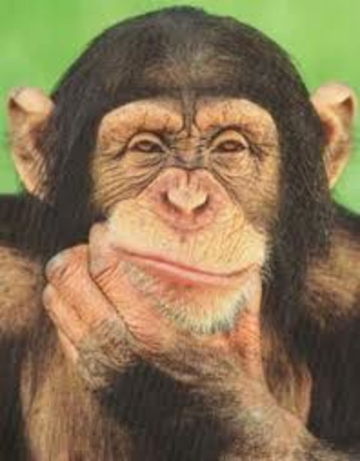 Those Lying Apes | Psychology Today