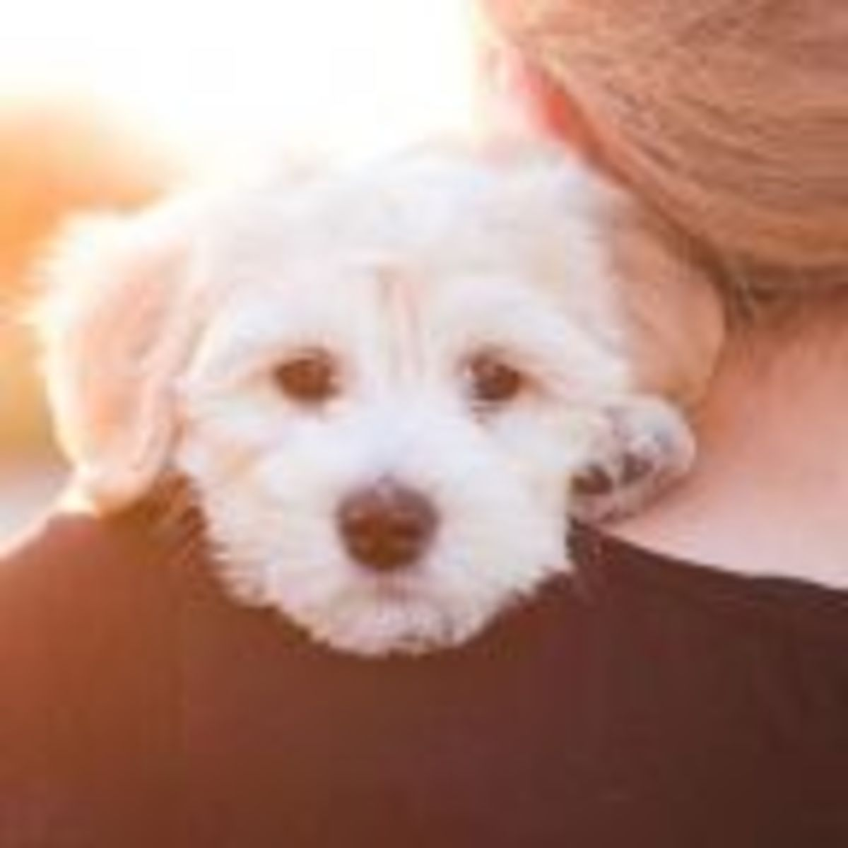 Who Gets the Dog? | Psychology Today