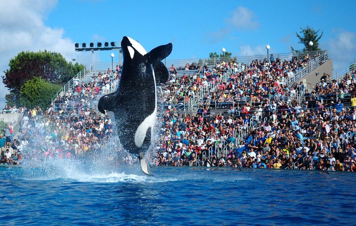 Why SeaWorld Can't Float: Censorship and Business Ethics