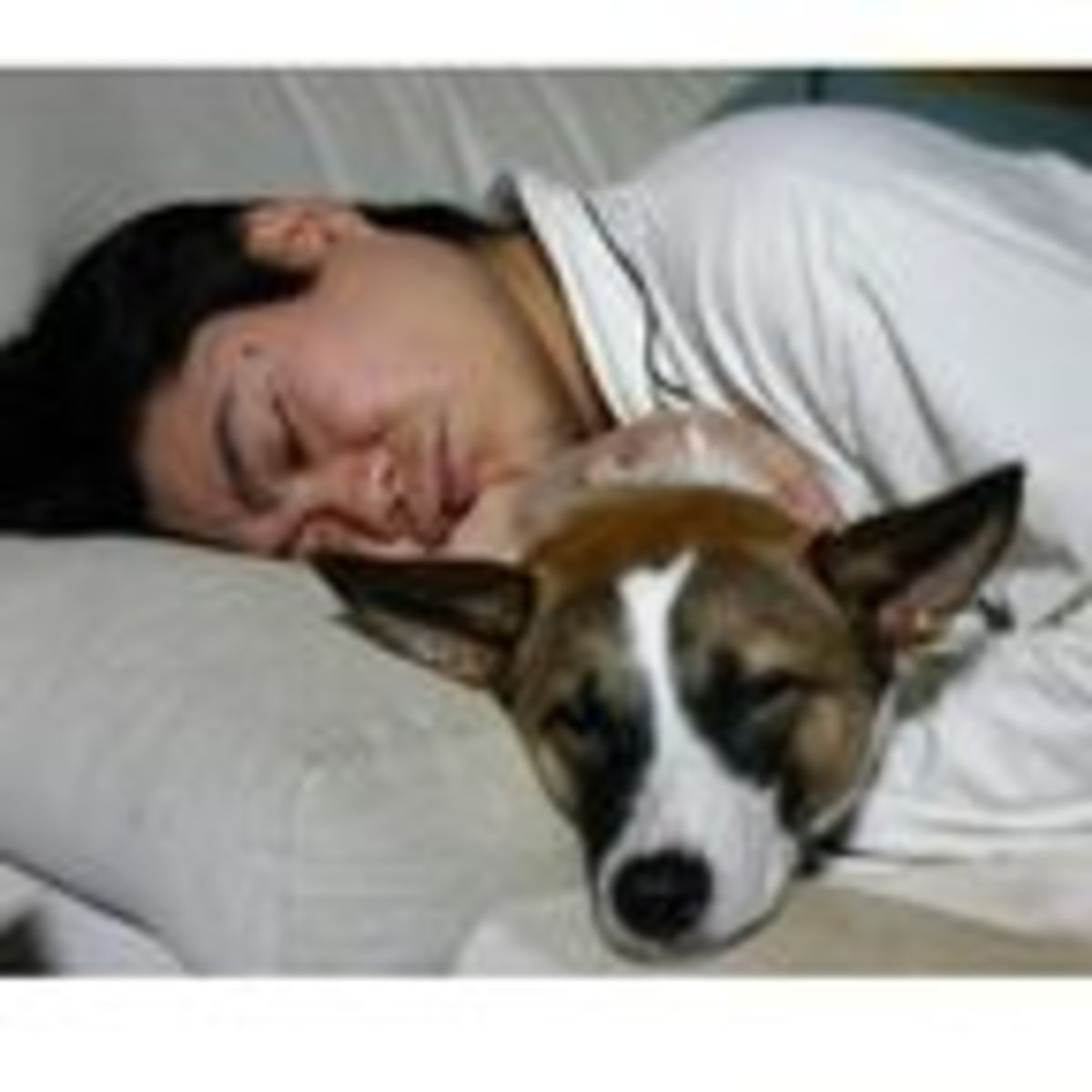 Should You Let Your Dog Sleep in Bed With You? | Psychology