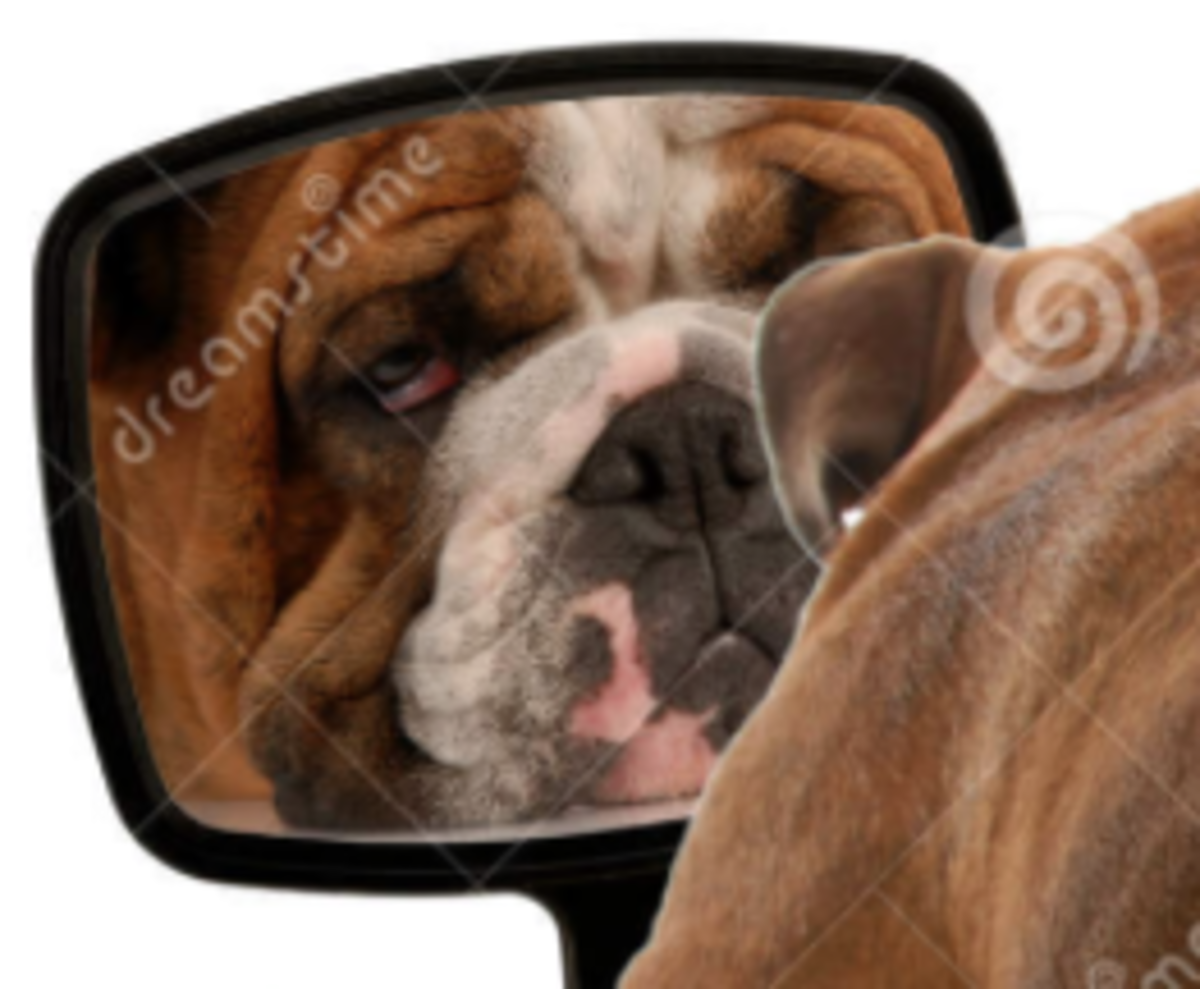 Animal Reflections: Do Mirror Images Mirror Self Awareness