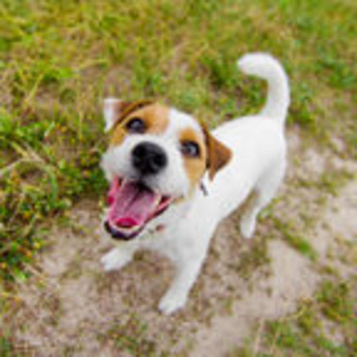 A Universal Translator for Dog Language | Psychology Today