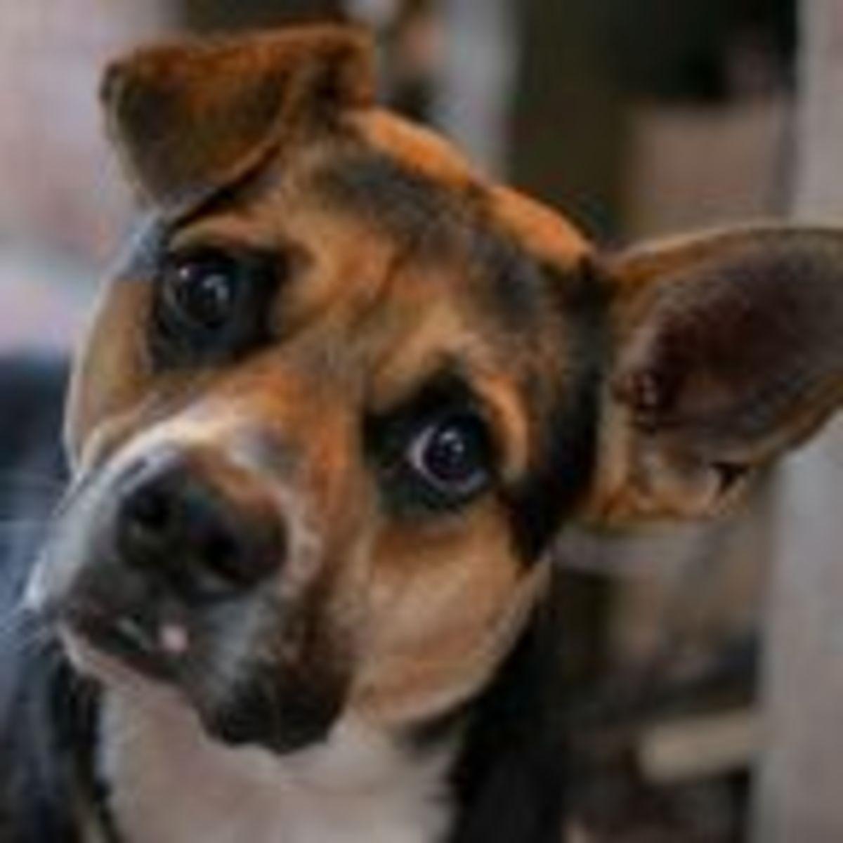 Pin by Tina Grossmann on Pets & Fireworks   Pet hacks, Pet safe, Dog safety