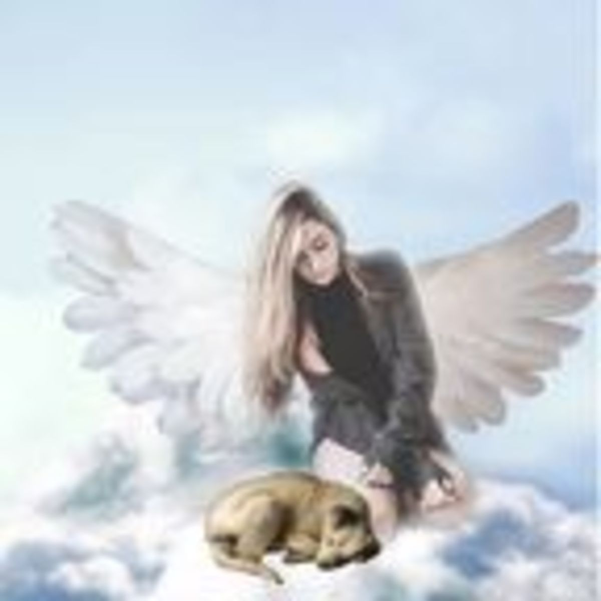 Are There Dogs In Heaven? | Psychology Today Ireland