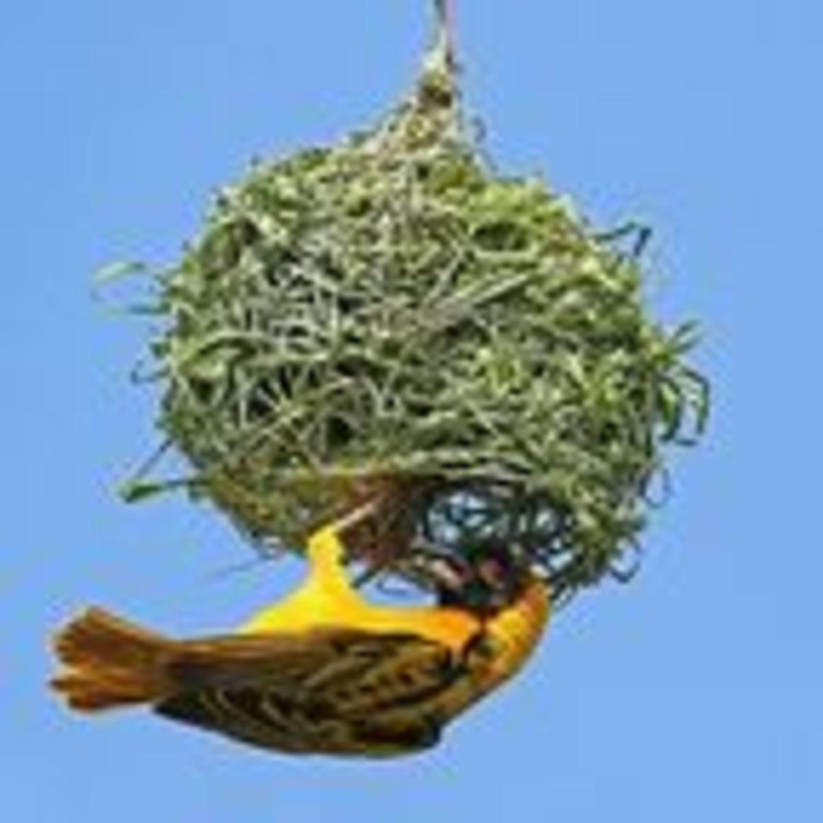 How Birds Nest | Psychology Today Canada
