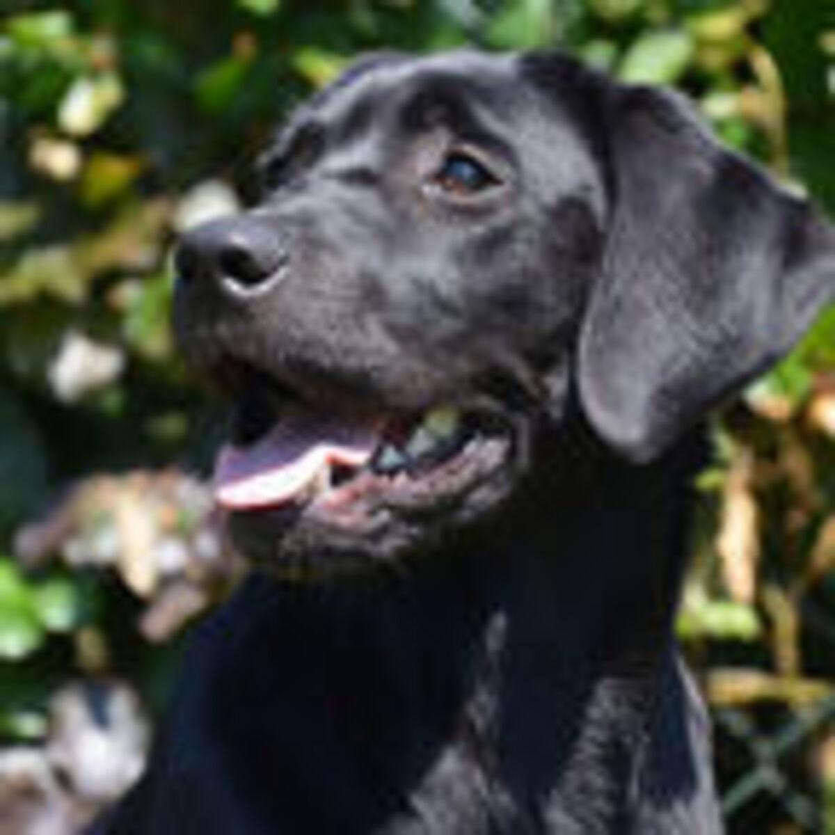 Training Methods Affect the Service Dog–Veteran Relationship