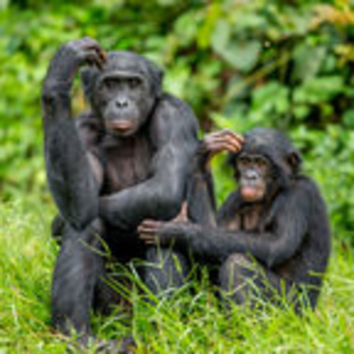 7 Things Bonobos Can Teach Us About Love and Sex