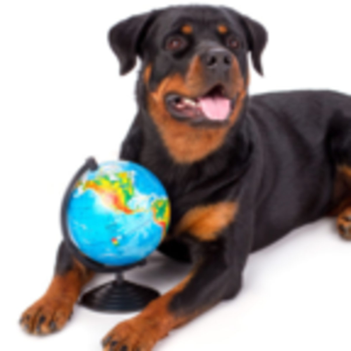 Is A Love Of Dogs Mostly A Matter Of Where You Live Psychology Today