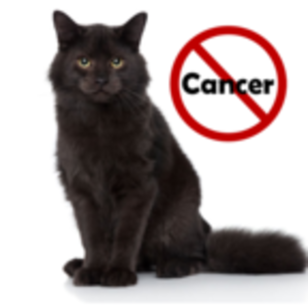 The Strange Link Between Pet Ownership And Cancer In Women Psychology Today