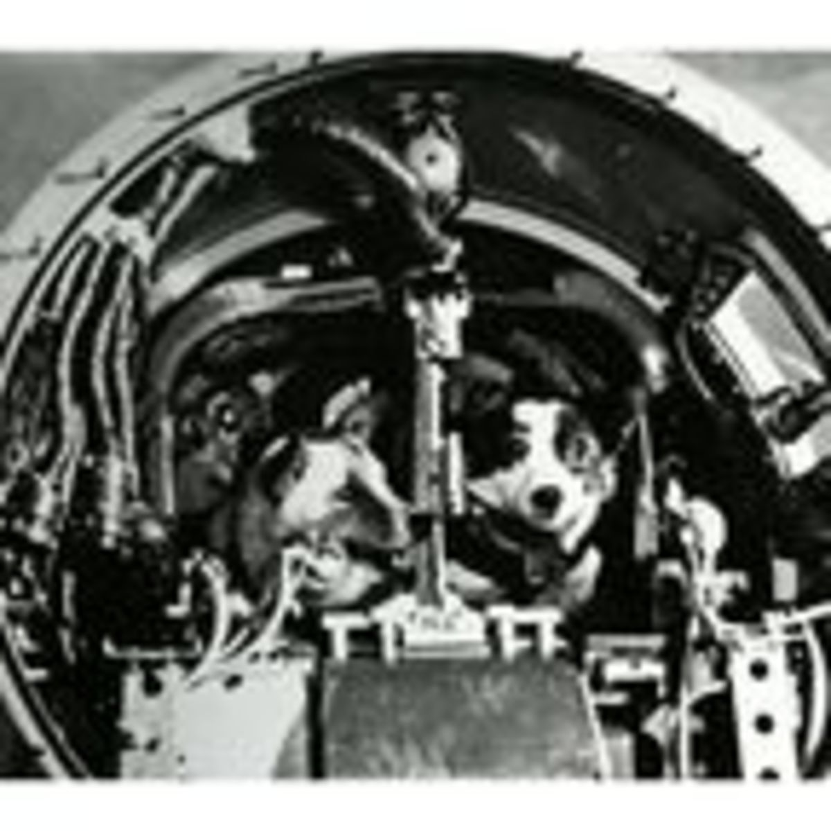 Dogs in the Space Program | Psychology Today