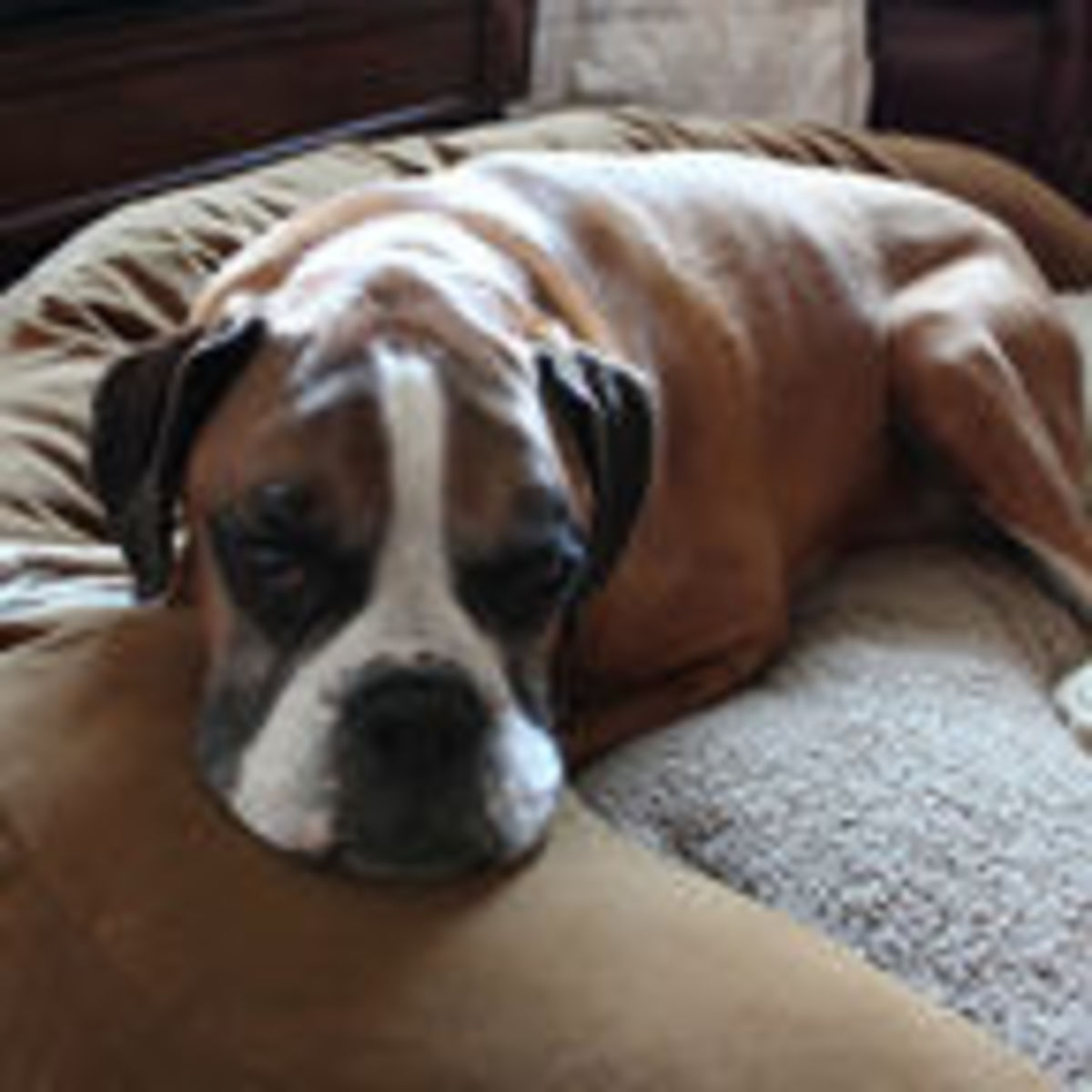 Why Do Dogs Turn in Circles Before Lying Down? | Psychology Today