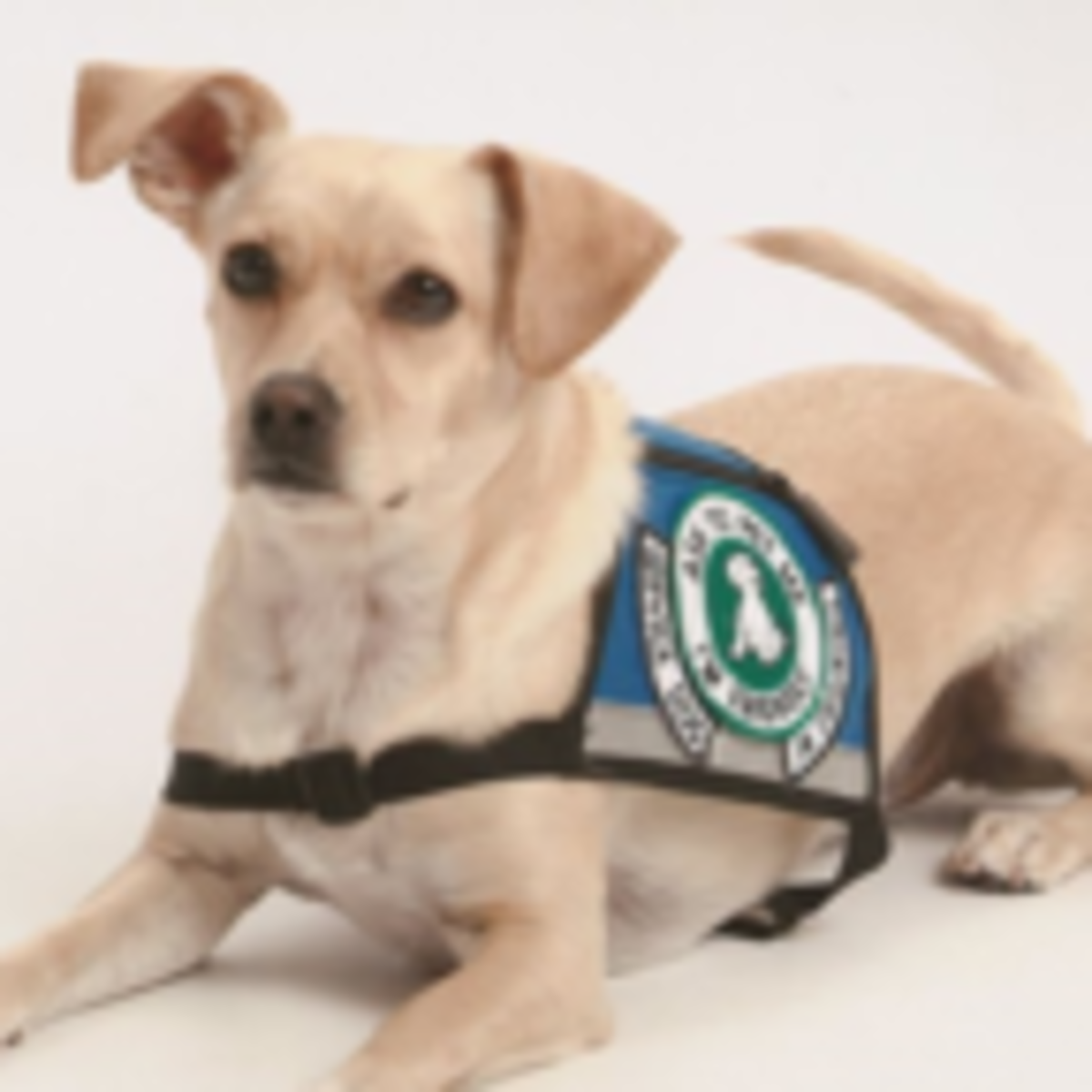 8 Misconceptions About Therapy, Service, and Support Animals