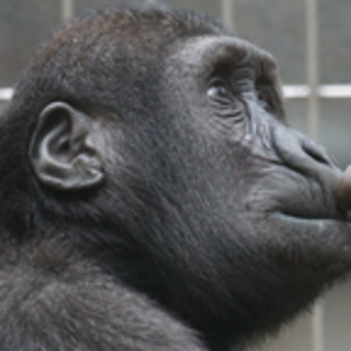 That's Not Really True About Evolutionary Psychology | Psychology Today