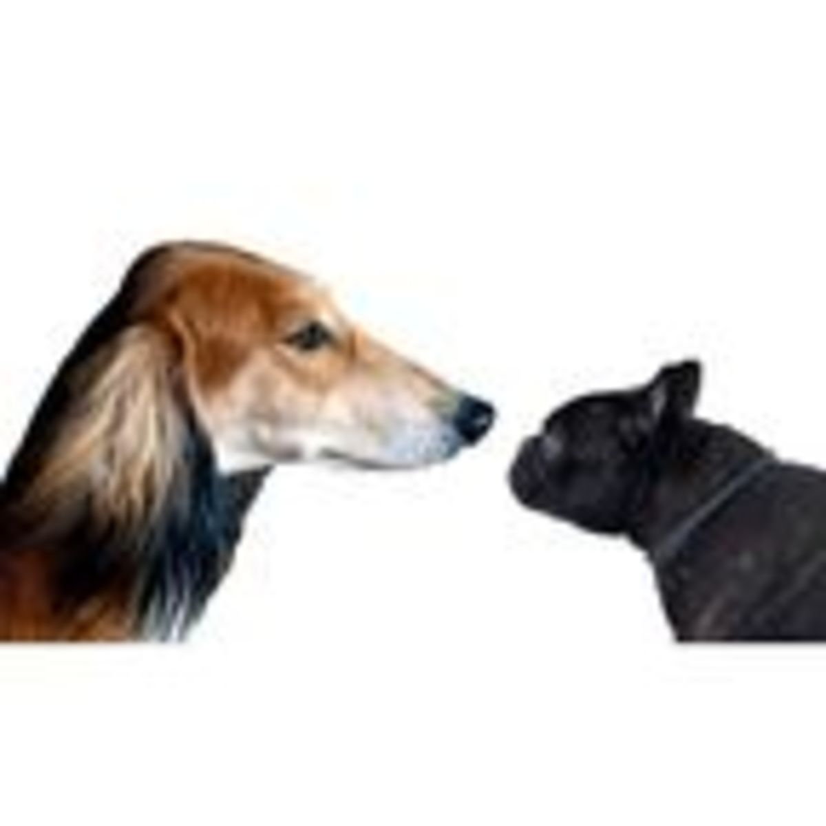 A Dog's Size and Head Shape Predicts Its Behavior