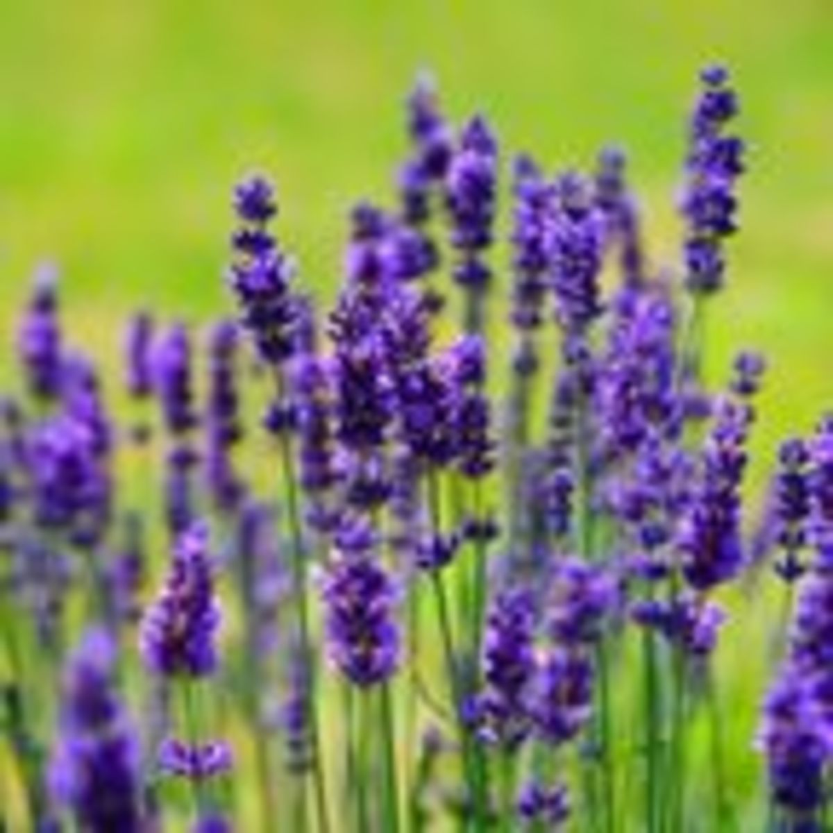 Six Aromatherapy Essential Oils for Stress Relief and Sleep