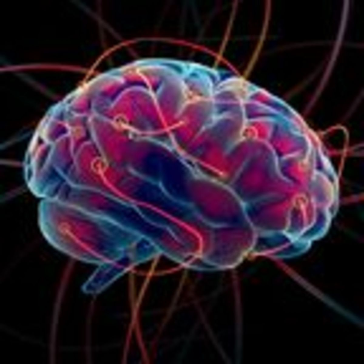 How Do Neuroplasticity and Neurogenesis Rewire Your Brain