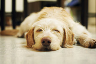 Do Dogs Dream? | Psychology Today