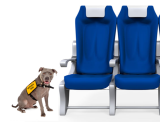 Dog by Susan Richey-Schmitz/123RF; Seat by Nerthuz/123RF
