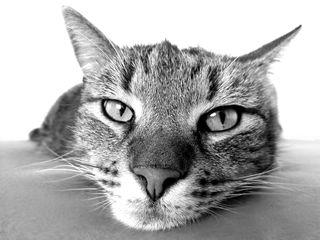pixabay/katzenspielzeug