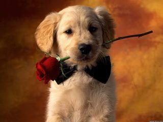 san valentino infedeltà regalo