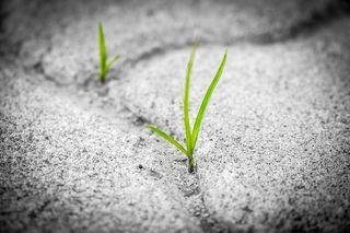 TambiraPhotography/Pixabay