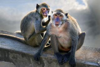 Suthat Chaithaweesap/Shutterstock