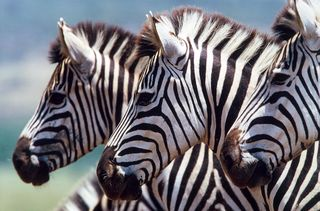 Safari Partners/Flickr