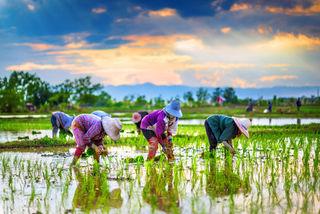 Chatrawee Wiratgasem/Shutterstock
